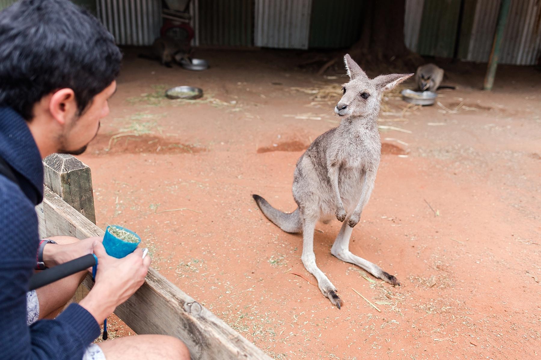 featherdale-wildlife-park-australia_0152.jpg