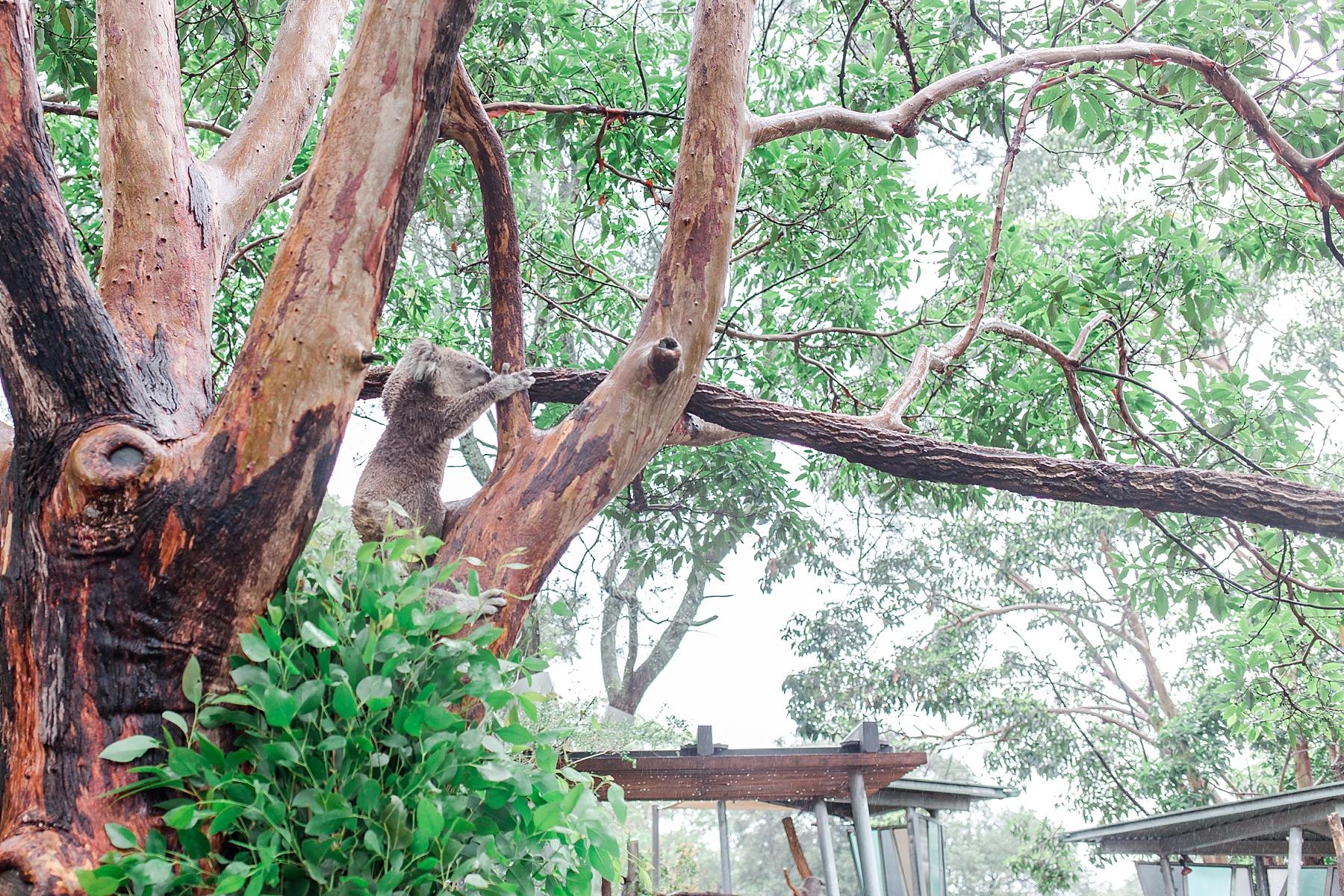 featherdale-wildlife-park-australia_0159.jpg