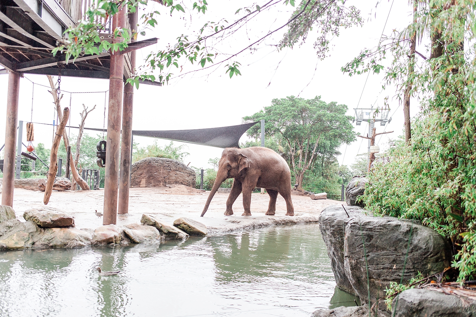 taronga-zoo-sydney-australia_0165.jpg