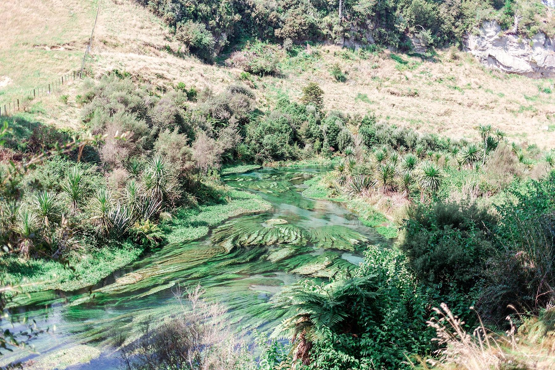 north-island-blue-springs-putaruru-new-zealand-scenery_0235.jpg