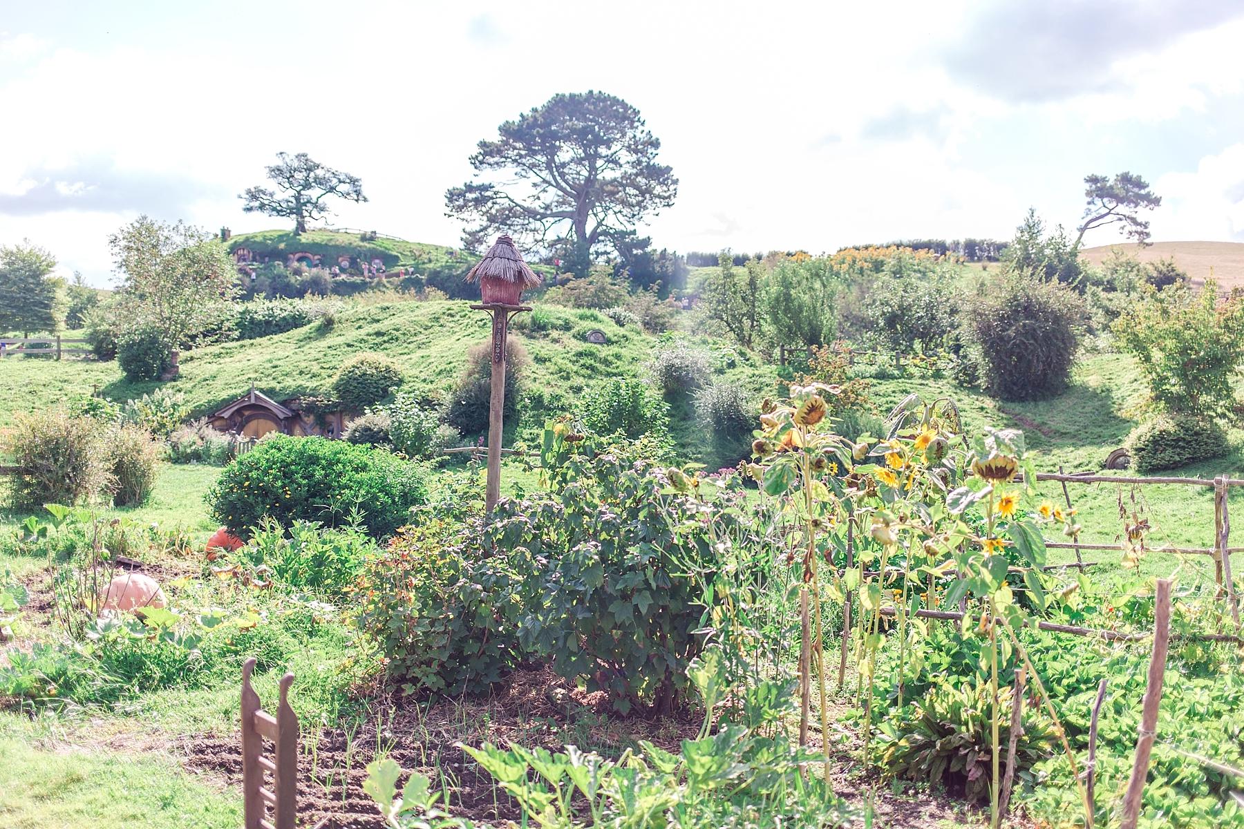 hobbiton-movie-set-matamata-hamilton-north-island-new-zealand-scenery_0241.jpg