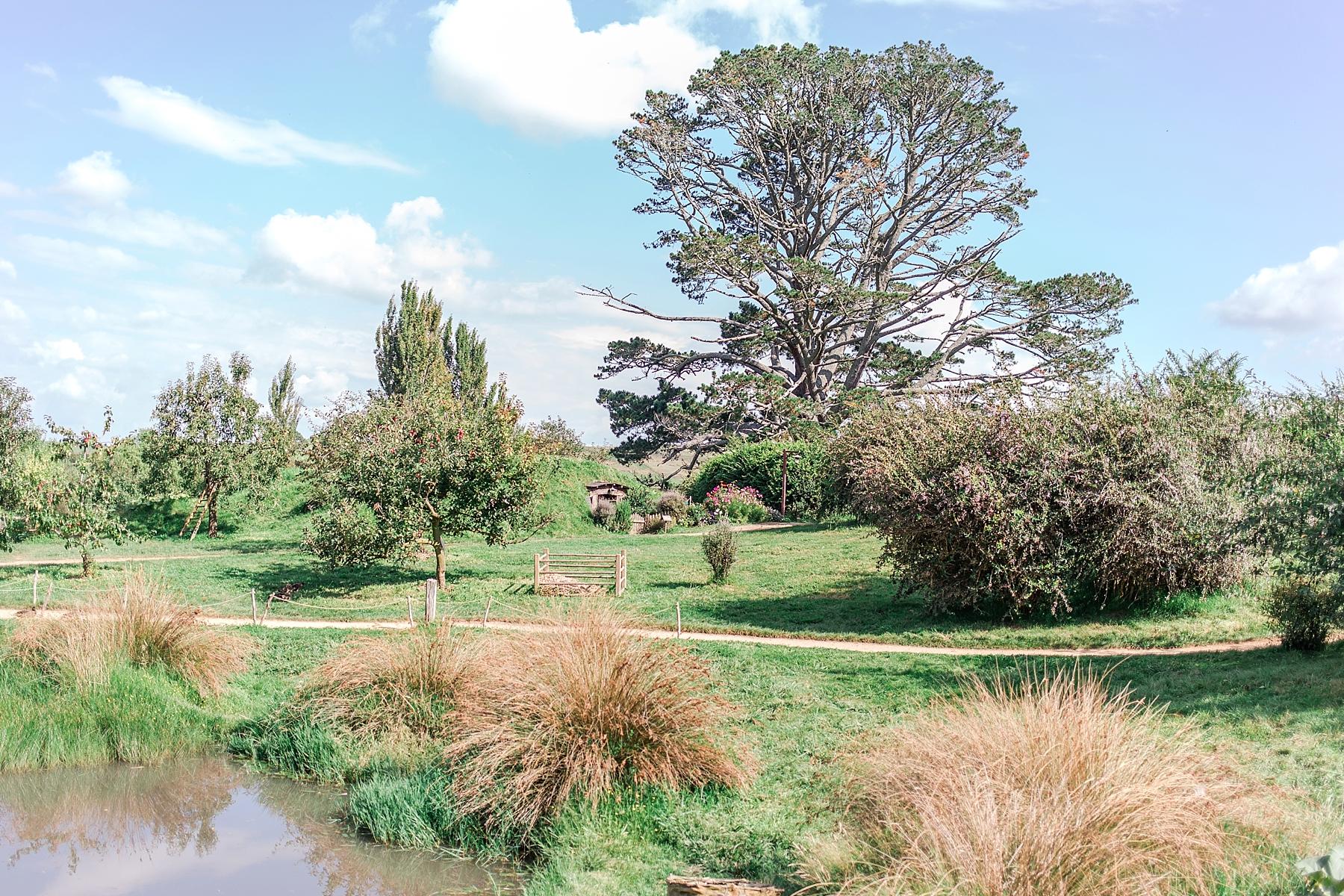 hobbiton-movie-set-matamata-hamilton-north-island-new-zealand-scenery_0247.jpg
