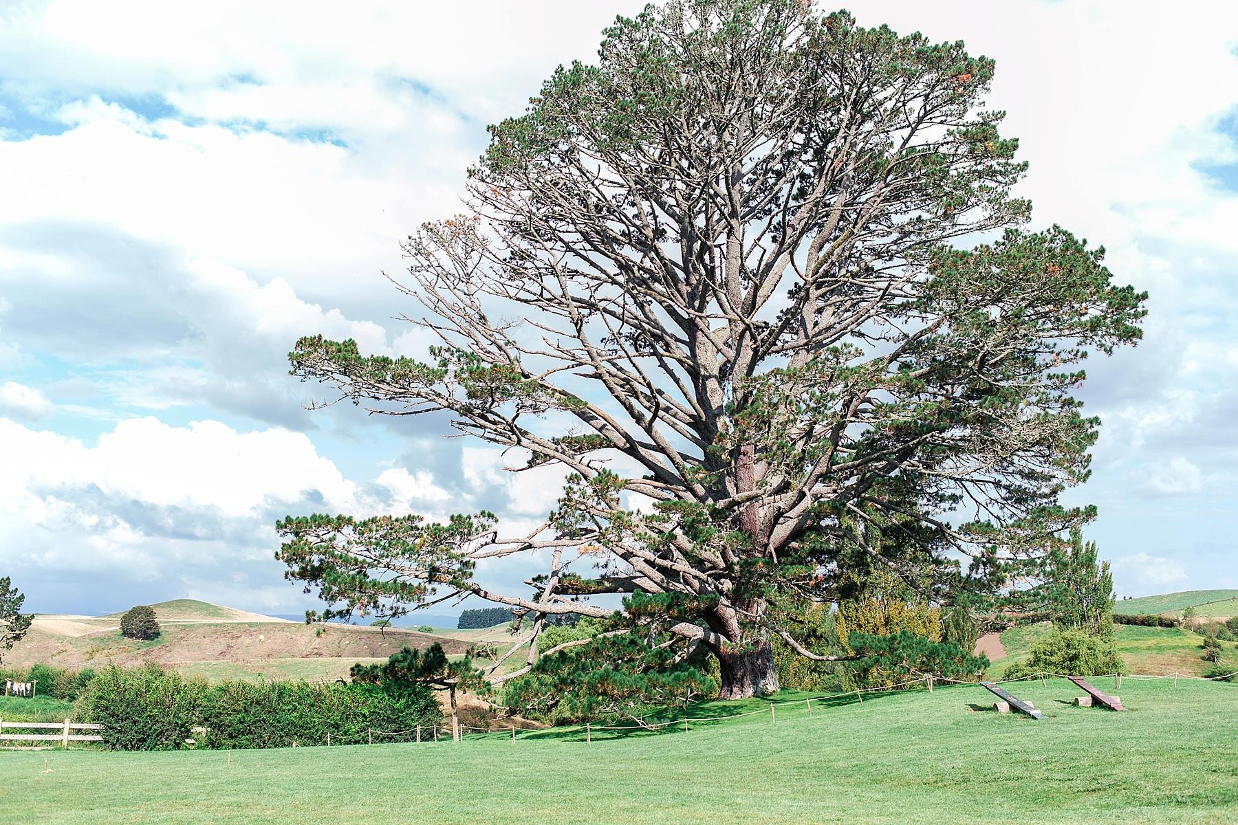 hobbiton-movie-set-matamata-hamilton-north-island-new-zealand-scenery_0257.jpg