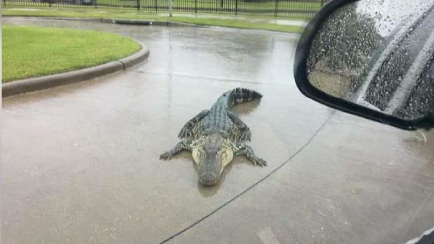 854081161001_5551864834001_Hurricane-Harvey-warning-Beware-of-alligators.jpg