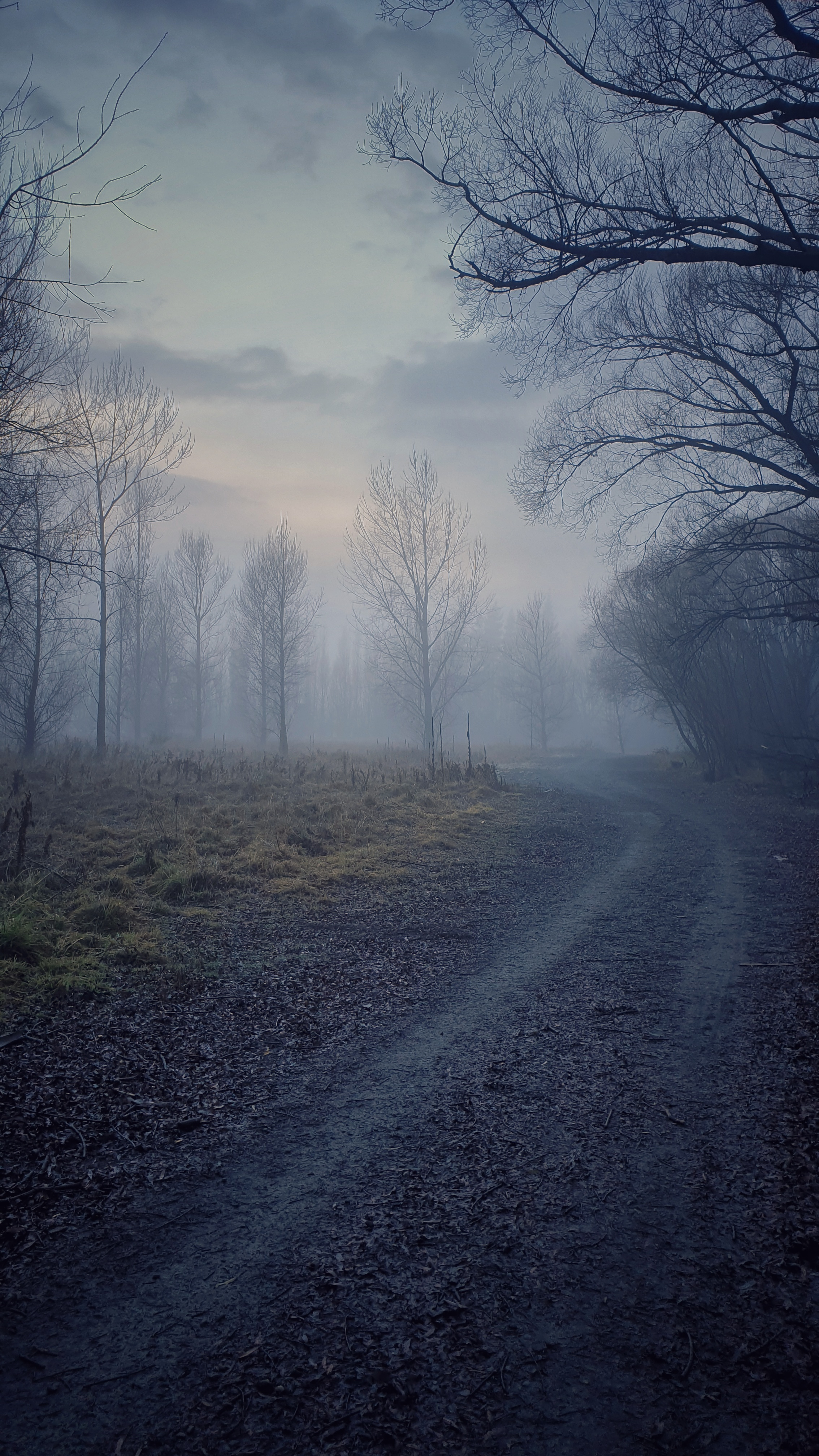 Foggy crisp mornings on the trail