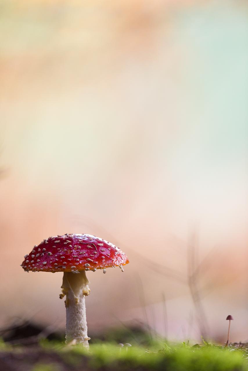 bestel_mushrooms_01.jpg