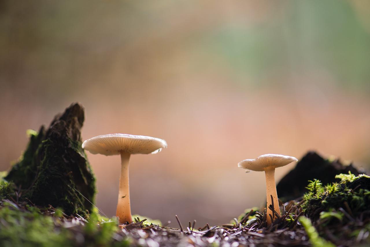 bestel_mushrooms_05.jpg