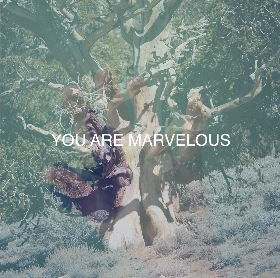 You Are Marvelous  (2018)   is a performance work incorporating video, text, sound, and object that merges a lineage of proto-humans with those of a biologically immortal lake creature, the oldest trees in the world, and a visitor to a modern-day psychic. The piece has been performed solo and collaboratively, with the text recited live.