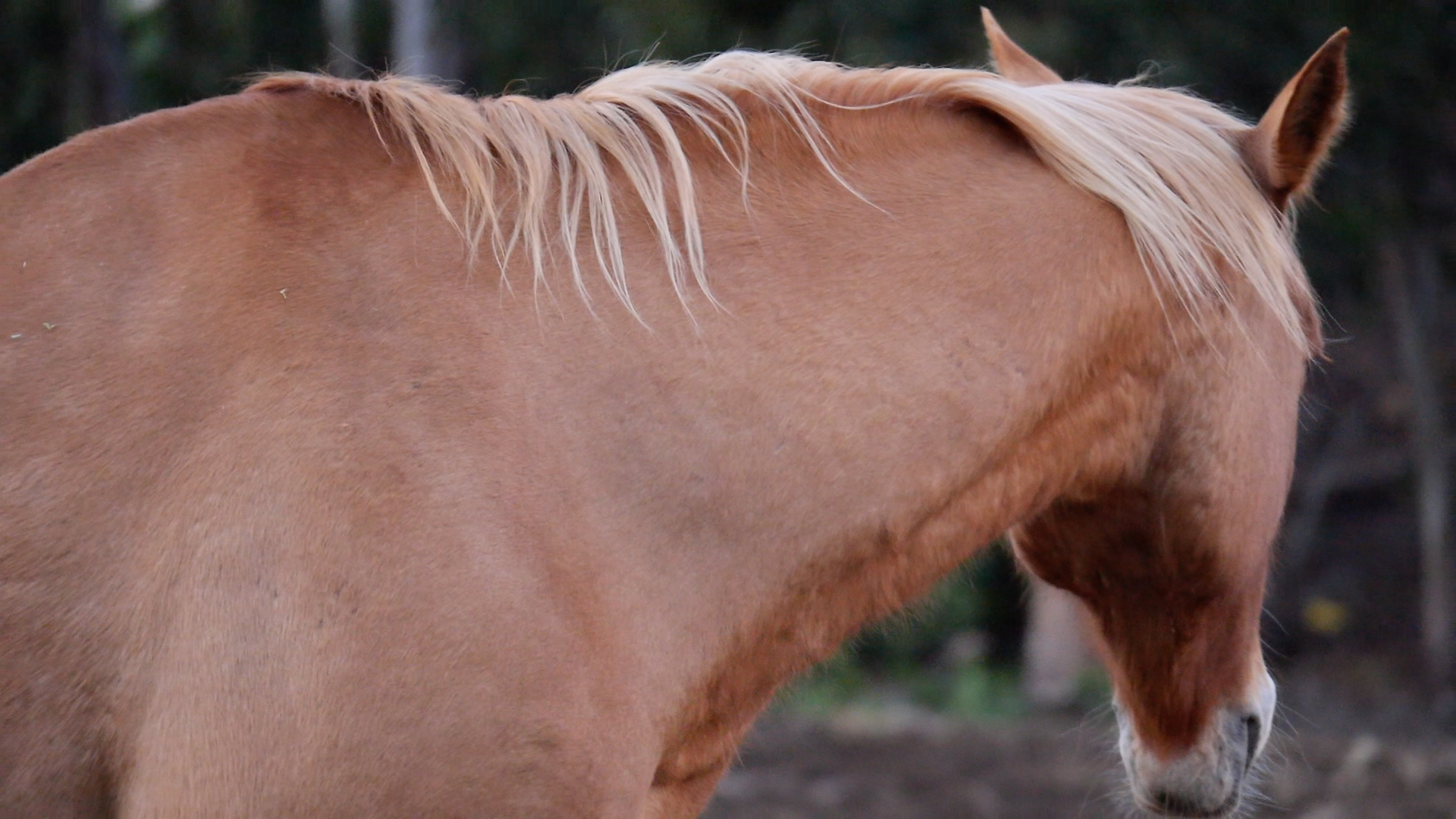 """""""I am obedient enough for dressage. I am calm enough for reining. I am docile enough to stand before an open gate."""""""