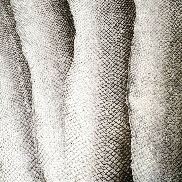 The natural grey salmonleather is always a head turner 🖤💫 . . . . #910 #atlanticleather #salmonleather #ecoleather #sustainablefuture #rawmaterials #madeiniceland #ecofashion