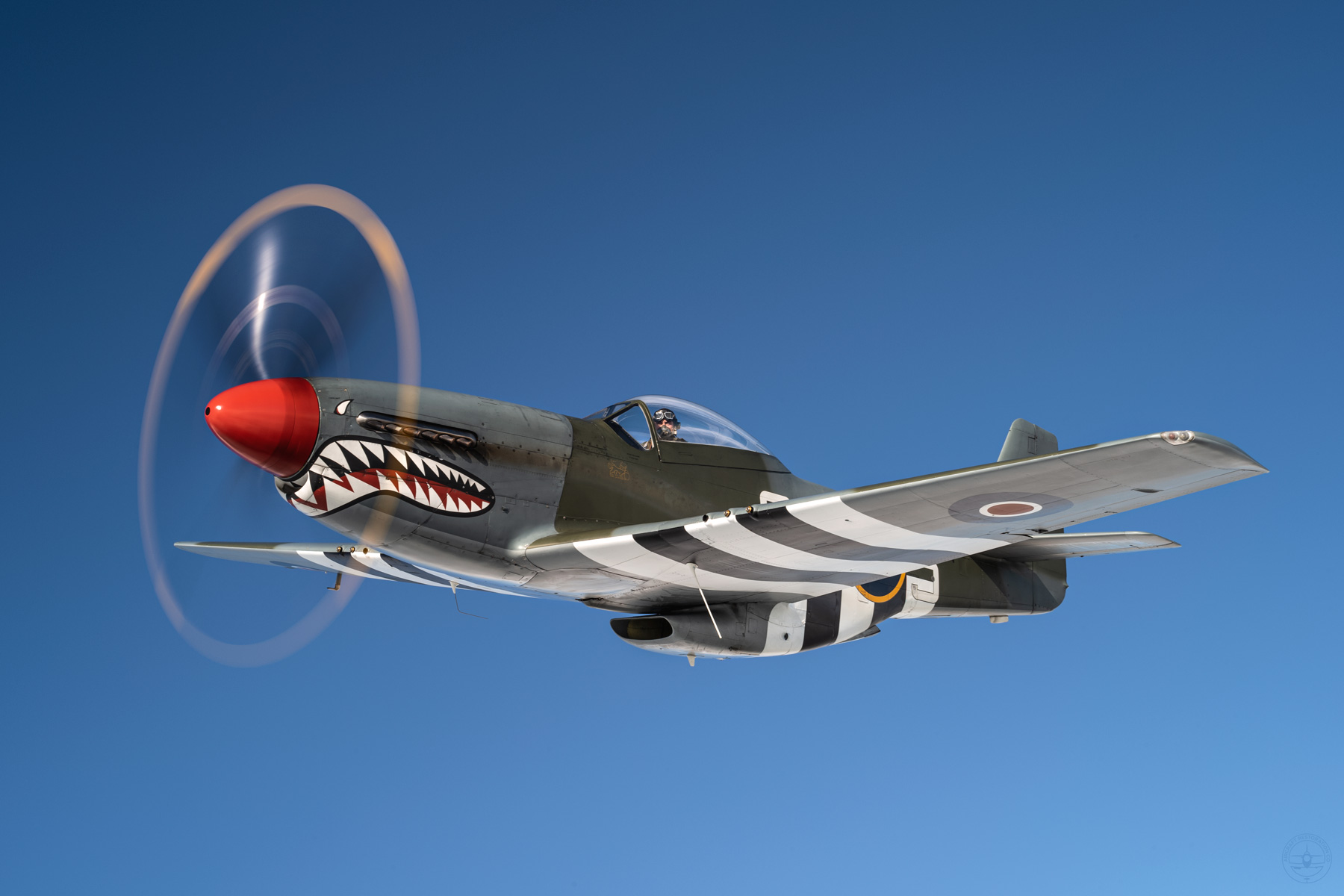 P51-Mustang-TheShark-aircraft-For-Sale.jpg