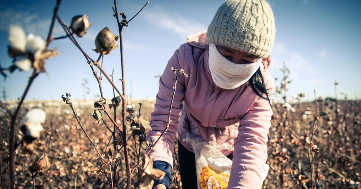 Seek n HIde cotton picker.jpg