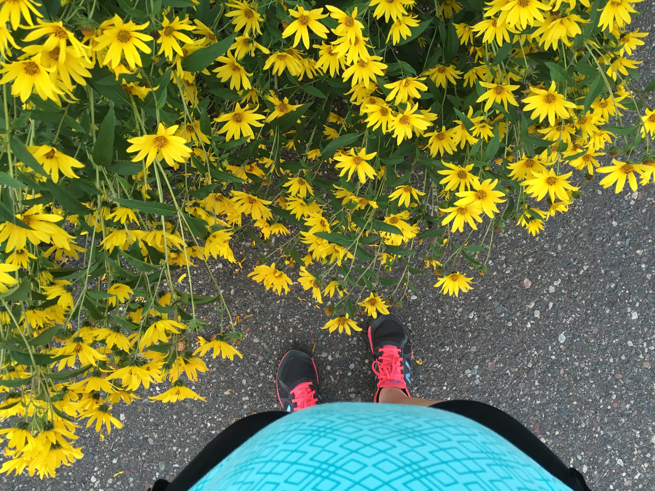 Happy yellow flowers and my 8 week postpartum belly at Minnehaha Falls in Minneapolis halfway through my first run.