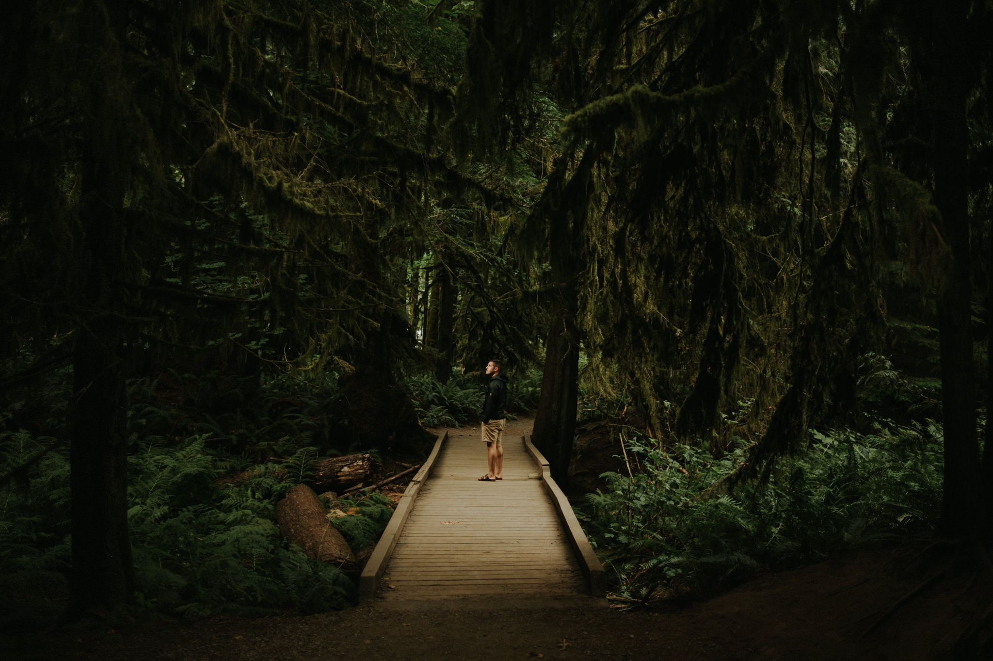 Cathedral Grove on Vancouver Island