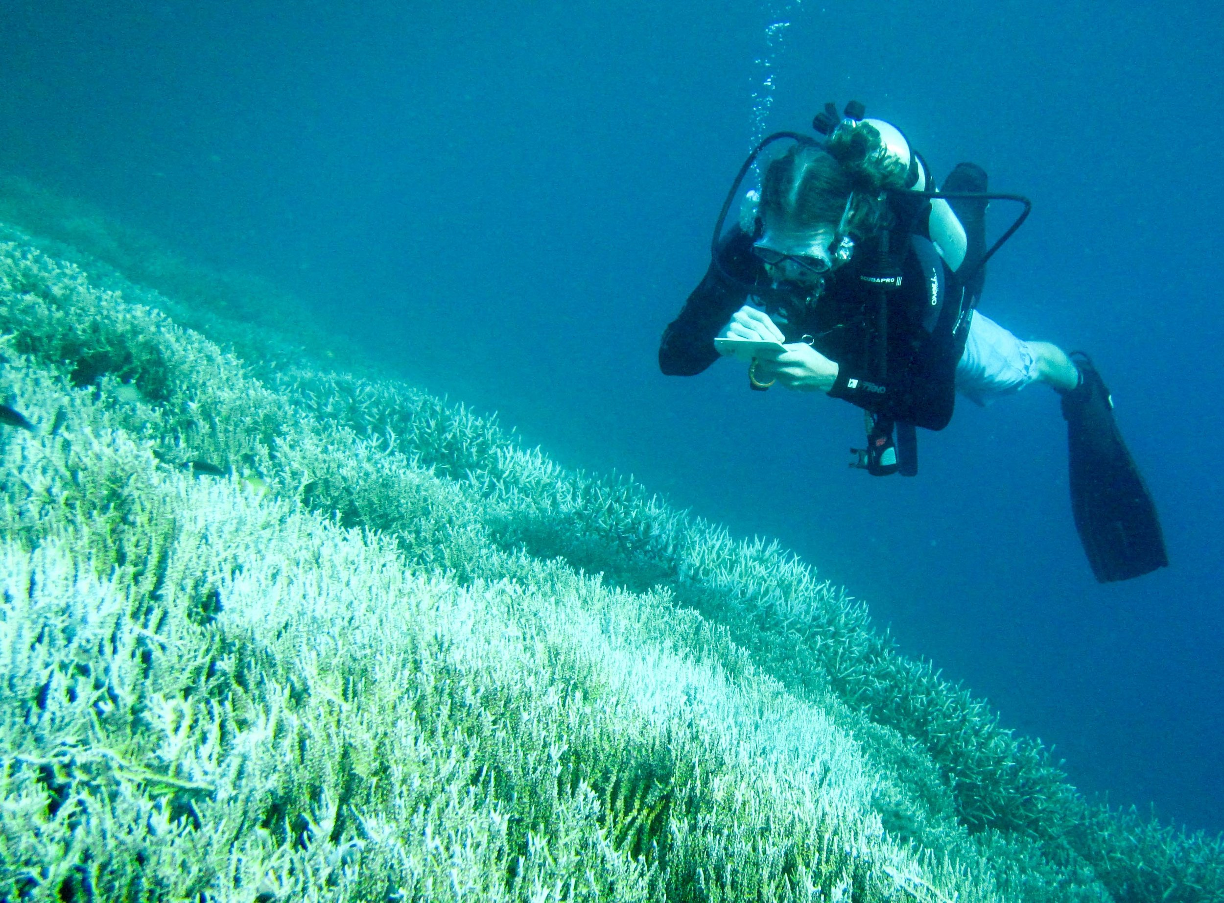 Austin surveying bleached coral reefs in Lombok.