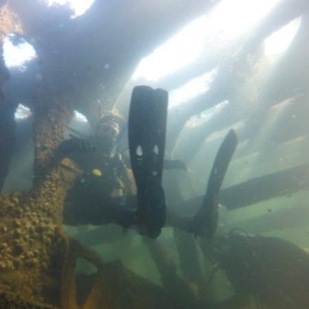Jack diving in Narragansett Bay, RI.