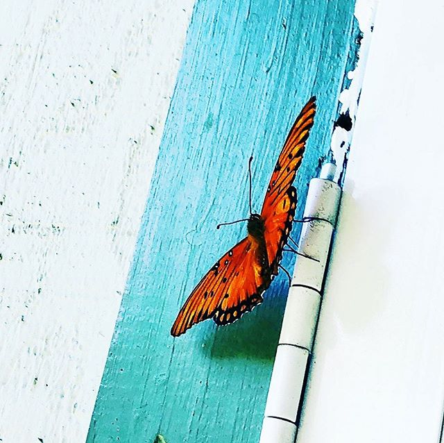 Sharing the love @seastarali 🦋  Posted @withrepost • @seastarali Right before I got home I was just sharing with a friend how much I miss Wendy and how I wish that she would come to me more in my dreams and waking life. Wendy knew how much I love #butterflies and thought of them as one of my #spirtanimals 🦋 when I first walked toward my door it was fluttering all around in front of it as if it wanted to come in. I instantly knew this was Wendy's orchestrating 😇! Thank you for your incredible #friendship Wendy in life and death. #love you #infinitely ❤️ ∞  #sistermoon #foreverfriends #blessings