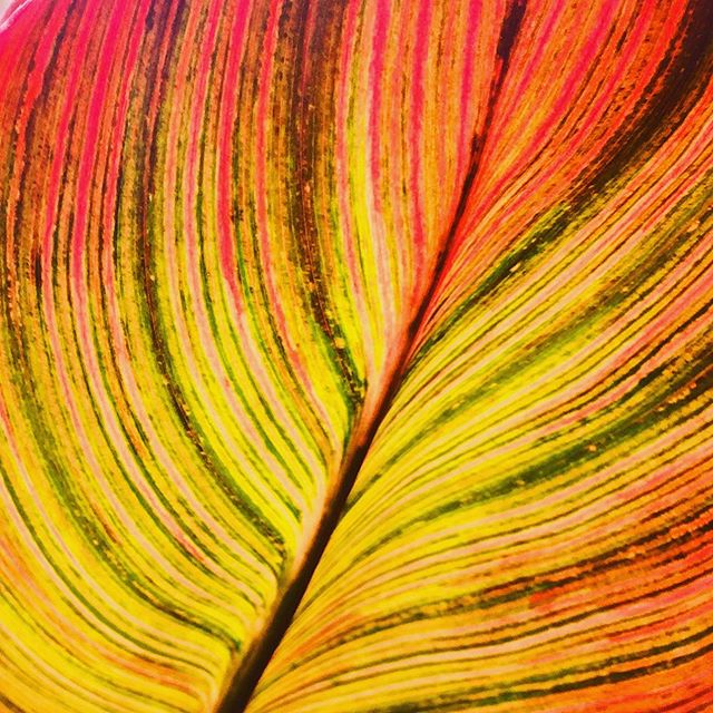 Leaf L🍁ve #colorinspo #spinpincreative