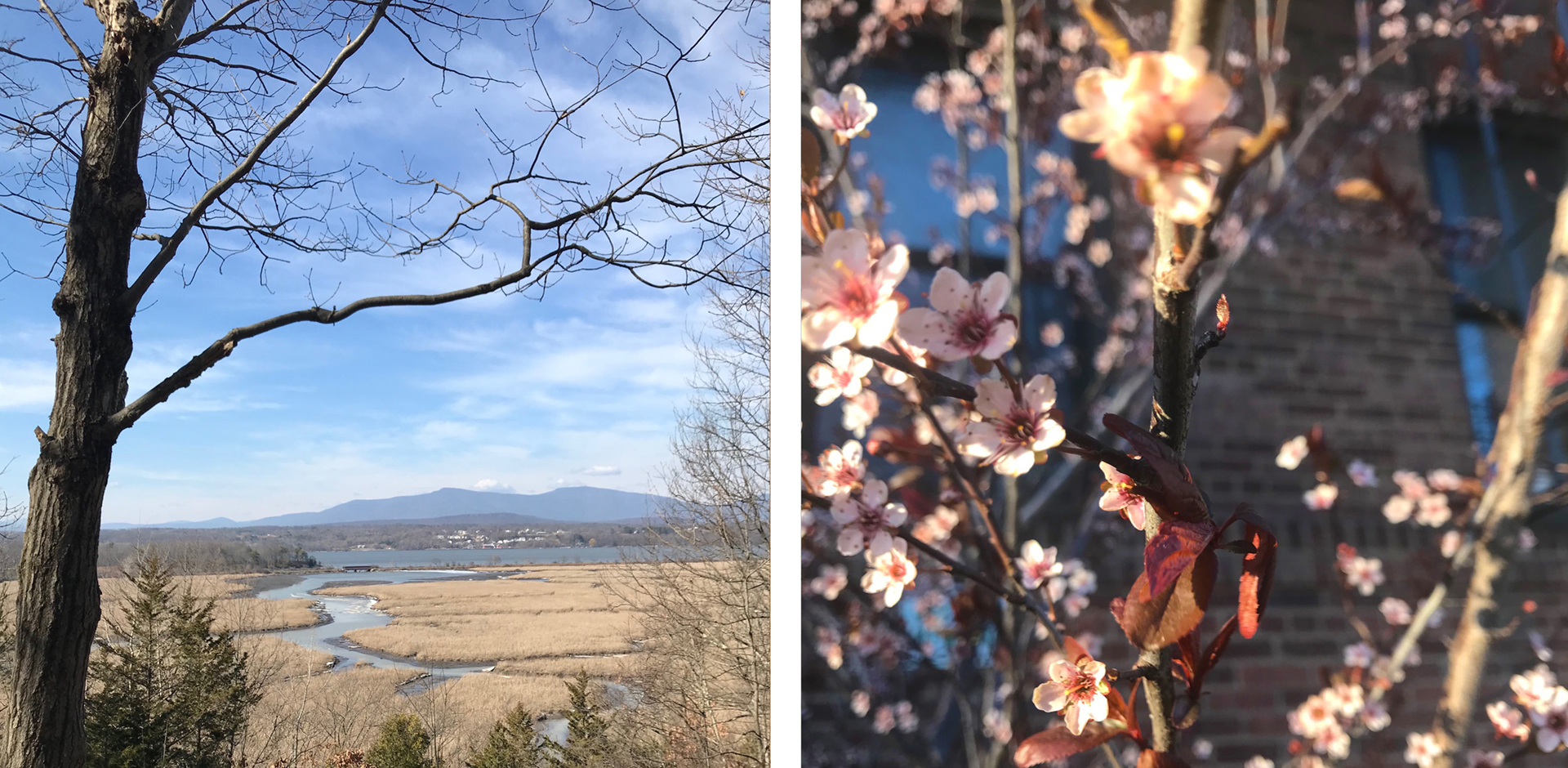 My favorite time of year in the Northeast, from slumber to bright eyed and rosy cheeked