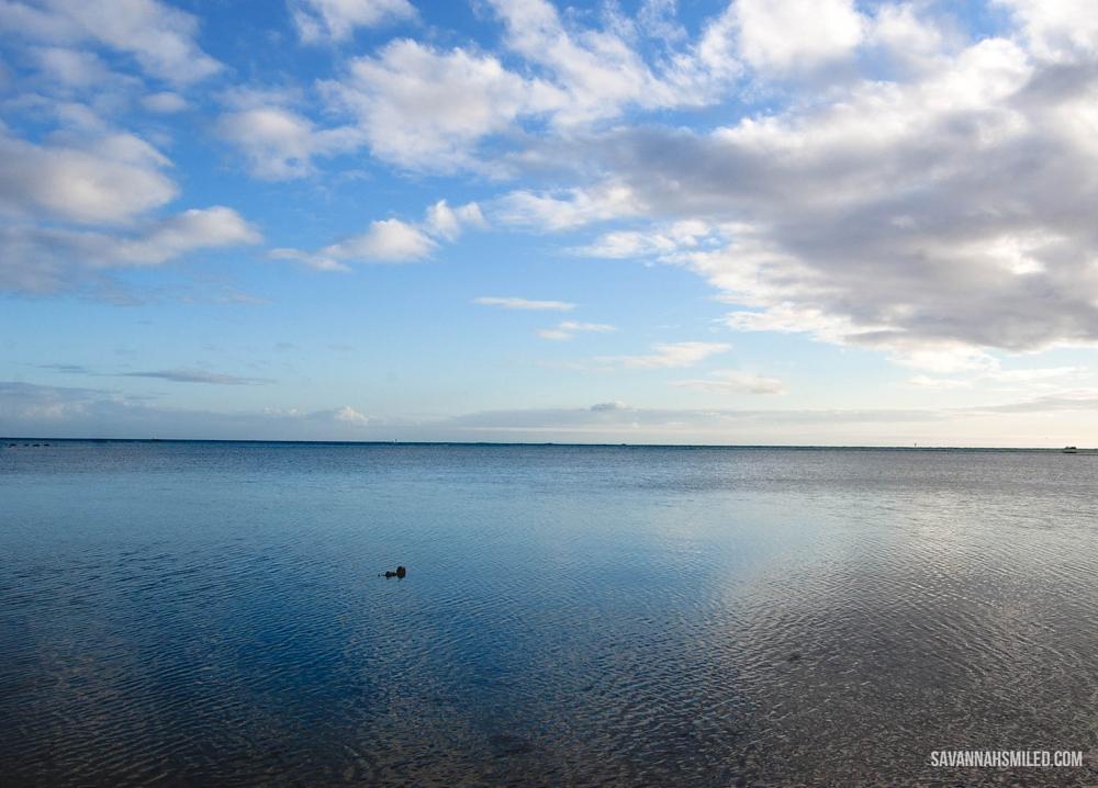 hickam-afb-dog-park-hawaii-3.jpg