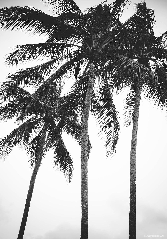 kailua-beach-hawaii-7.jpg