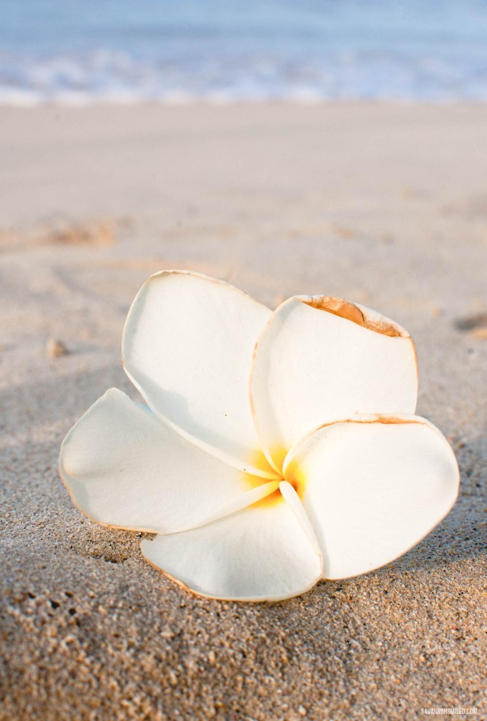 oahu-sand-beach-2.jpg