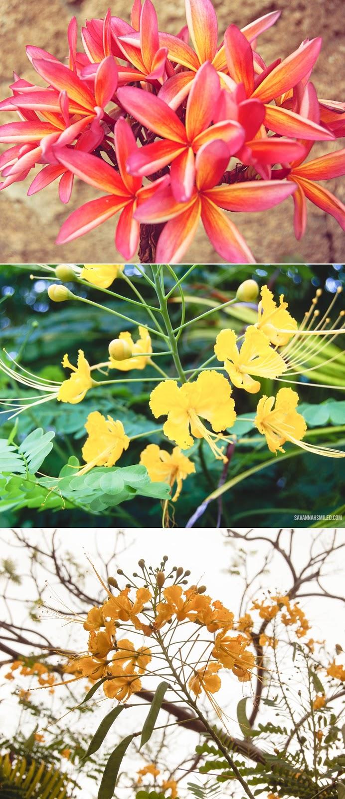 florals-in-kailua-hawaii-7.jpg