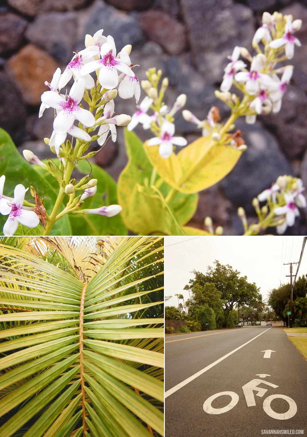 florals-in-kailua-hawaii-6.jpg
