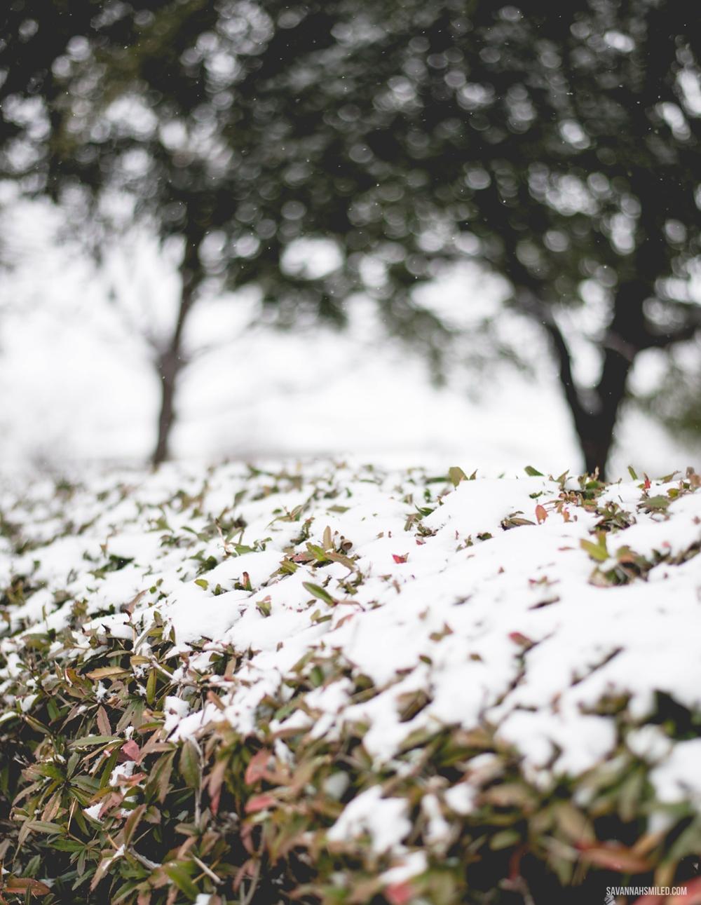 snow-day-dallas-weather-21.jpg