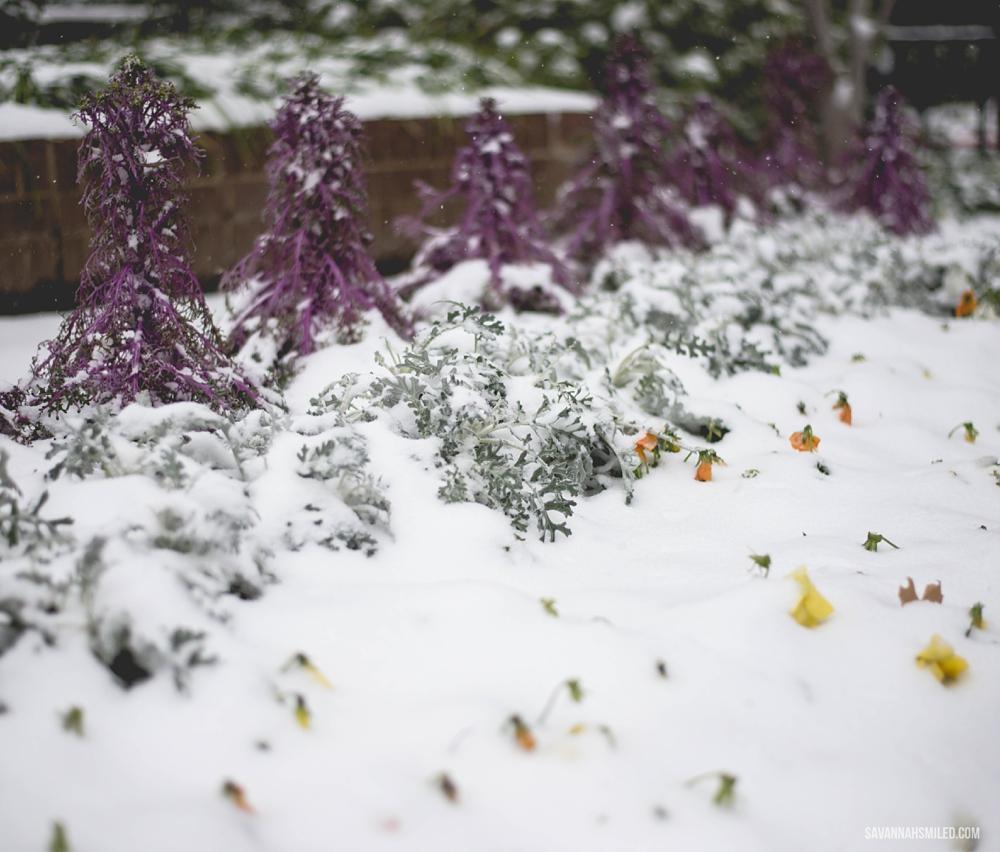 snow-day-dallas-weather-6.jpg