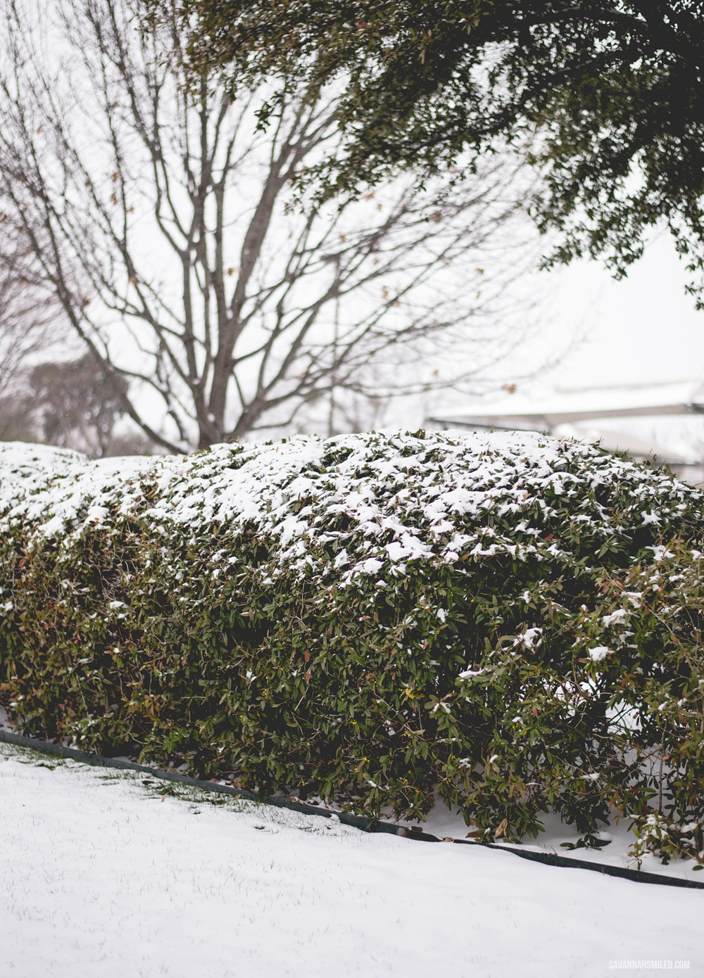 snow-day-dallas-weather-10.jpg