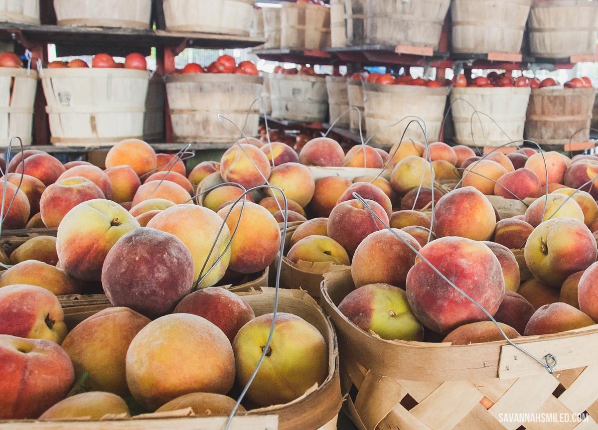 nashville-farmers-market-7.jpg