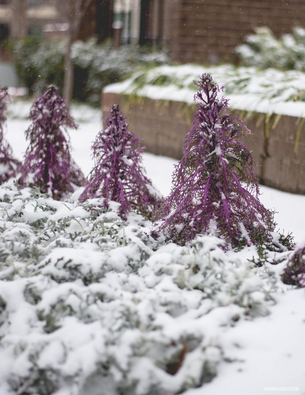 snow-day-dallas-weather-26.jpg