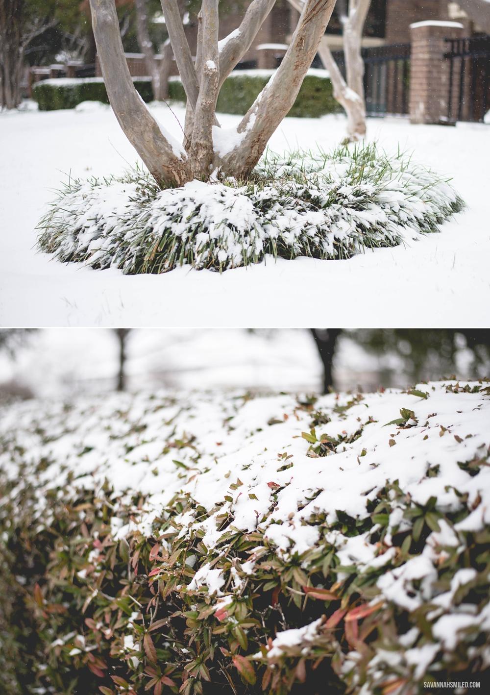 snow-day-dallas-weather-25.jpg