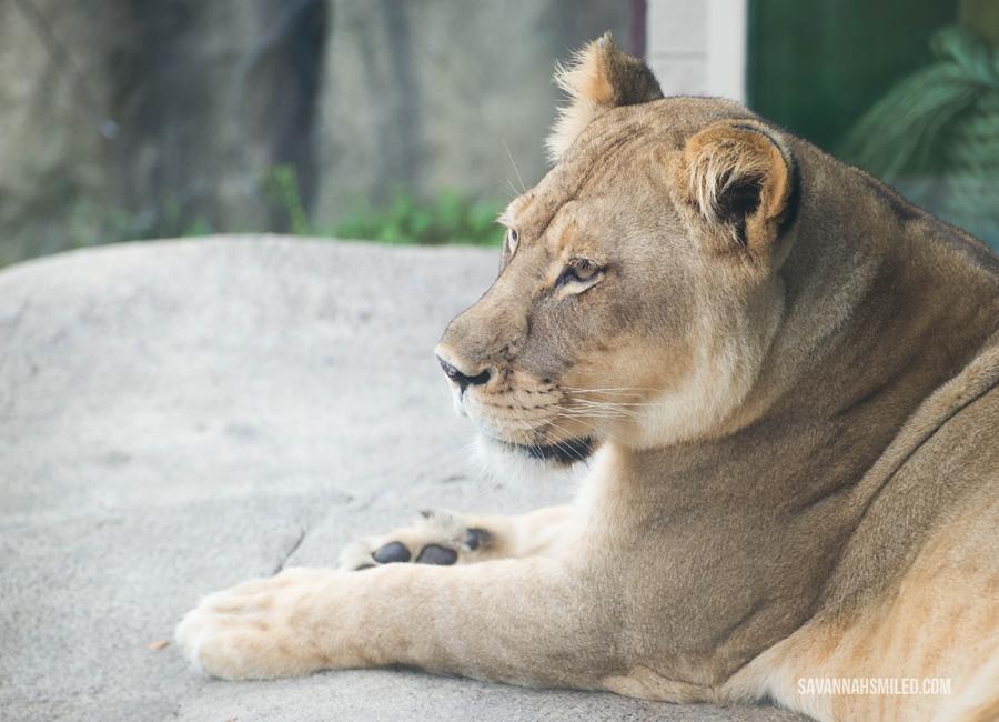 dallas-zoo-day-55.jpg