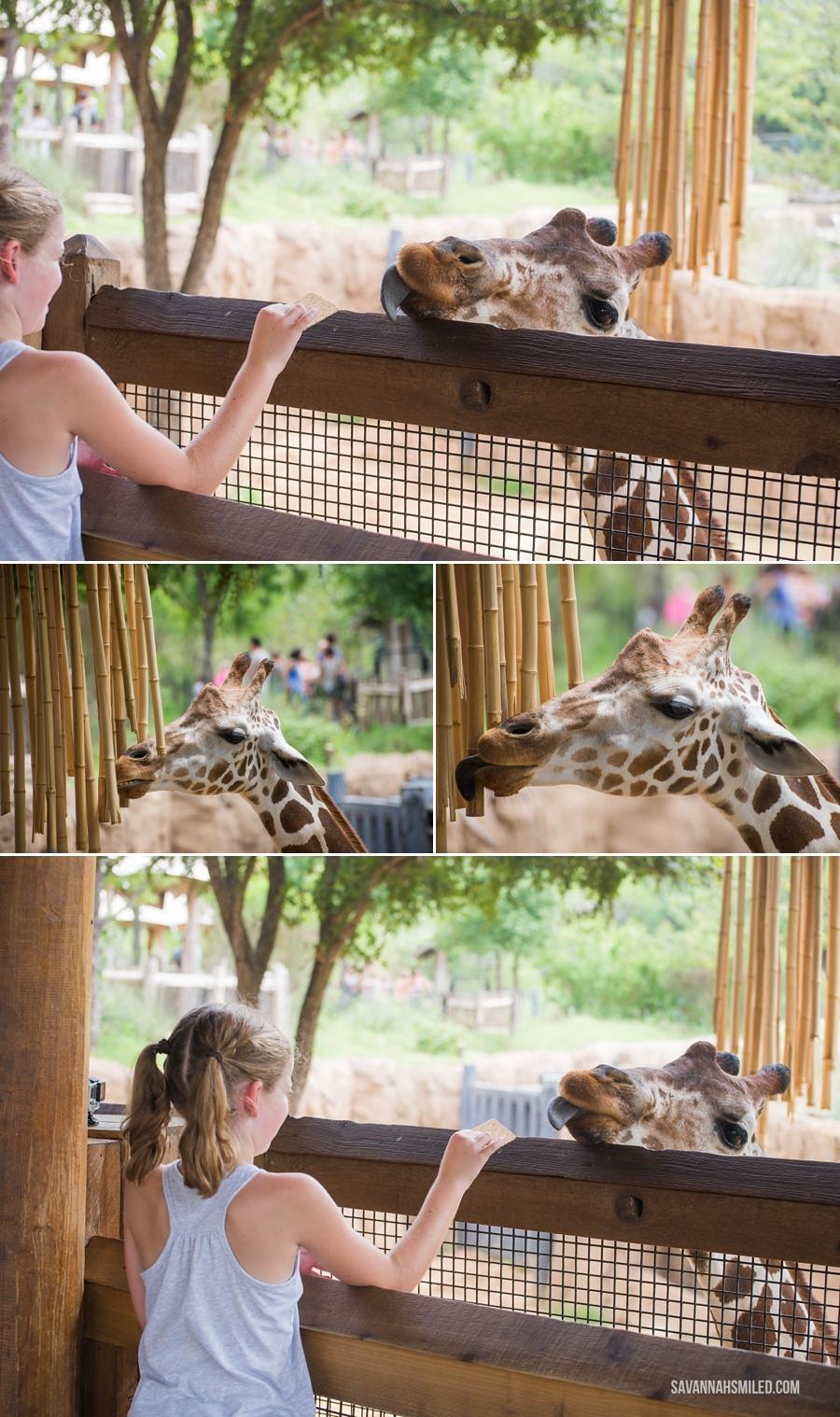dallas-zoo-day-49.jpg