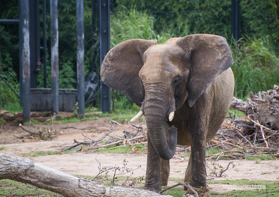 dallas-zoo-day-44.jpg