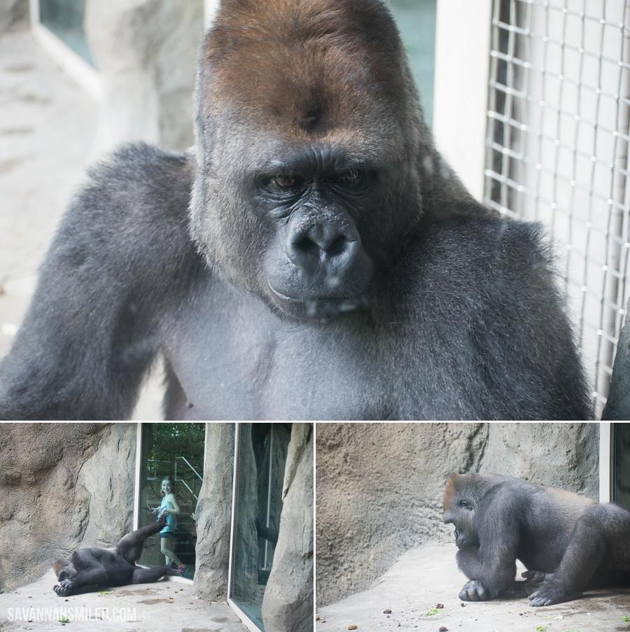 dallas-zoo-day-34.jpg