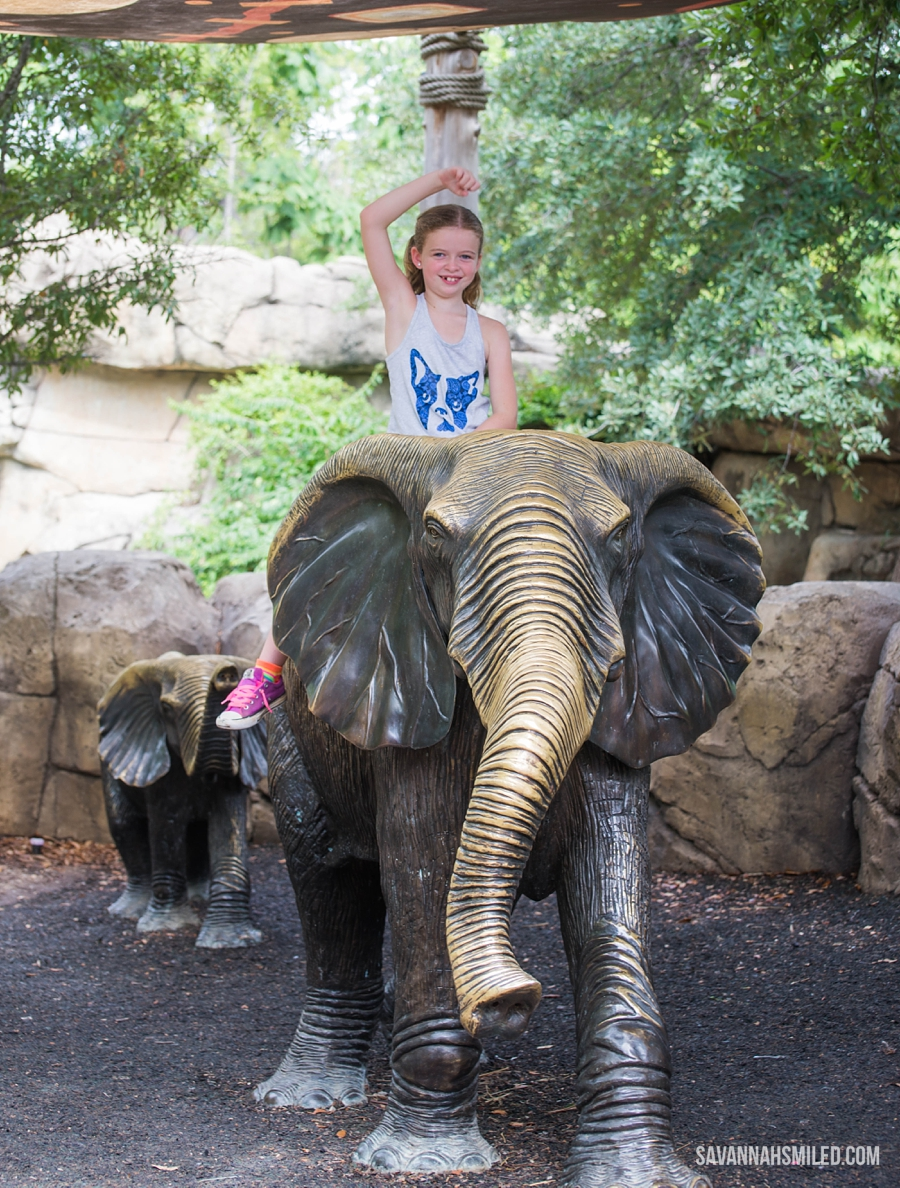 dallas-zoo-day-28.jpg