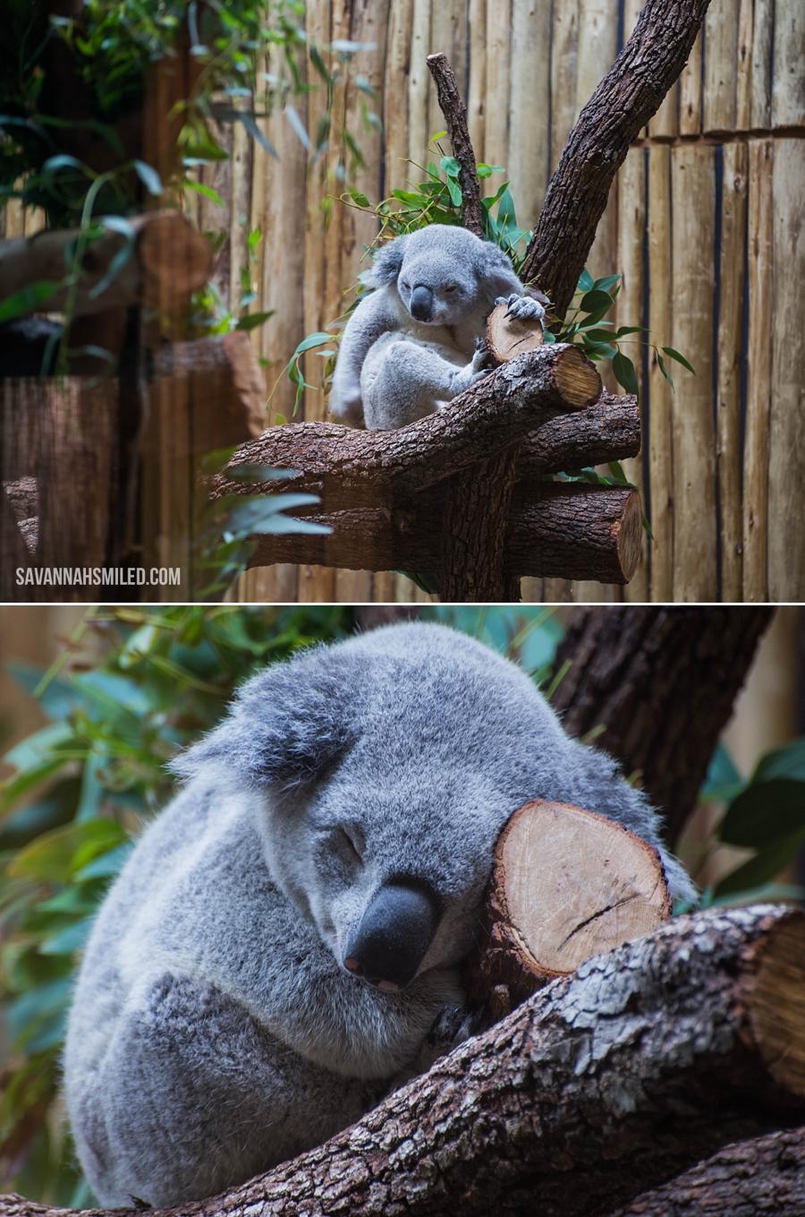 dallas-zoo-day-12.jpg