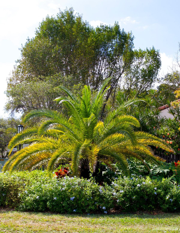 miami-florida-travel-blogger-blog.jpg