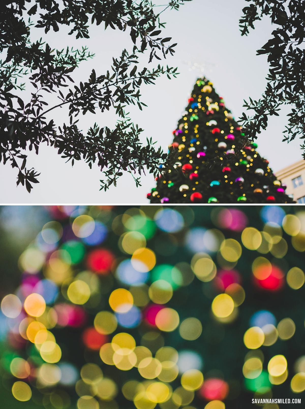 dallas-christmas-tree-6.jpg