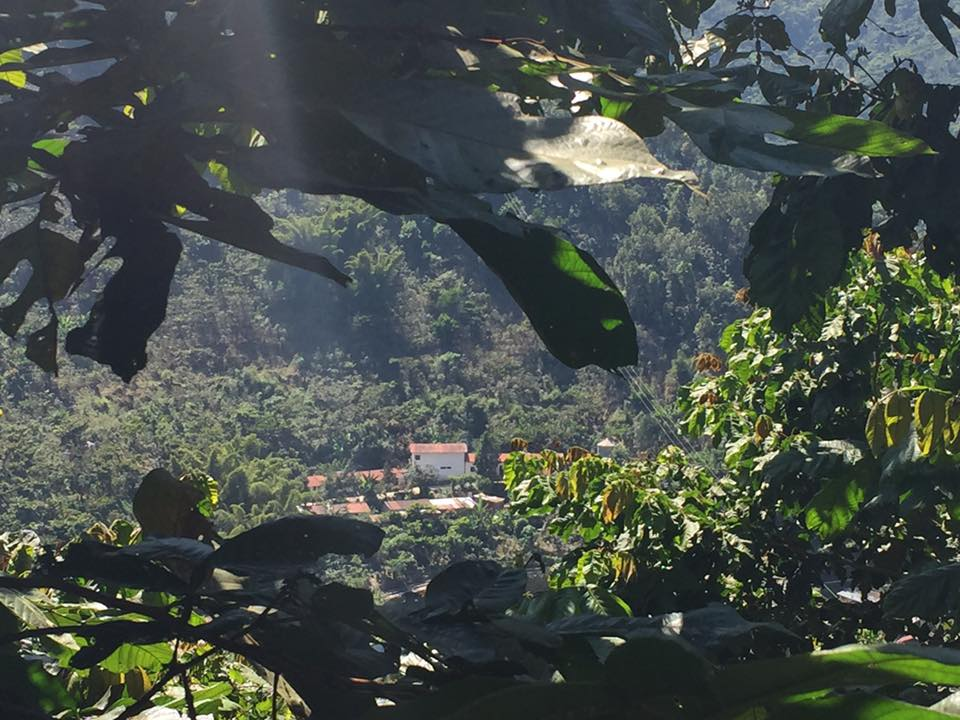 After a long walk through coffee trees and steep mountain sides it is definitely time to enjoy the view.