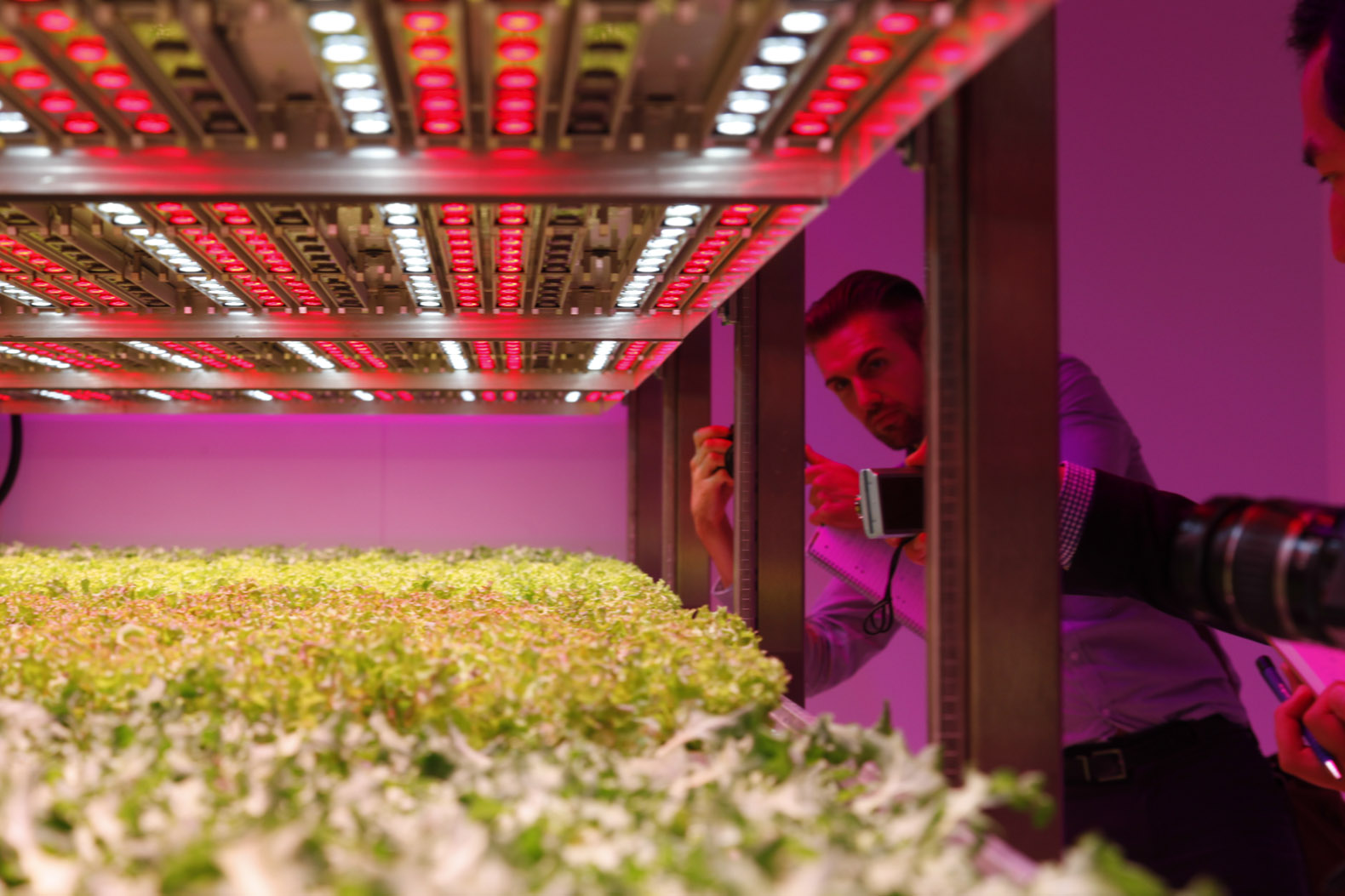 Inhabitat.com Philip's new GrowWise Urban Farming Research Facility in Eindhoven