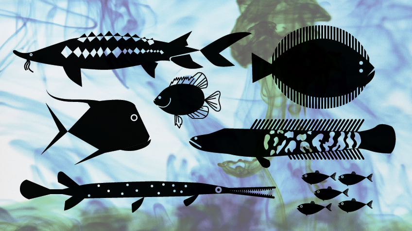 Character study for  Projected Aquaculture  animation.