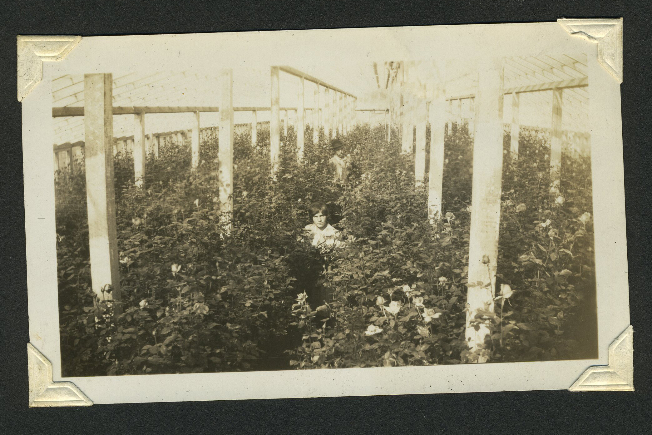Inside Greenhouses 5.jpg