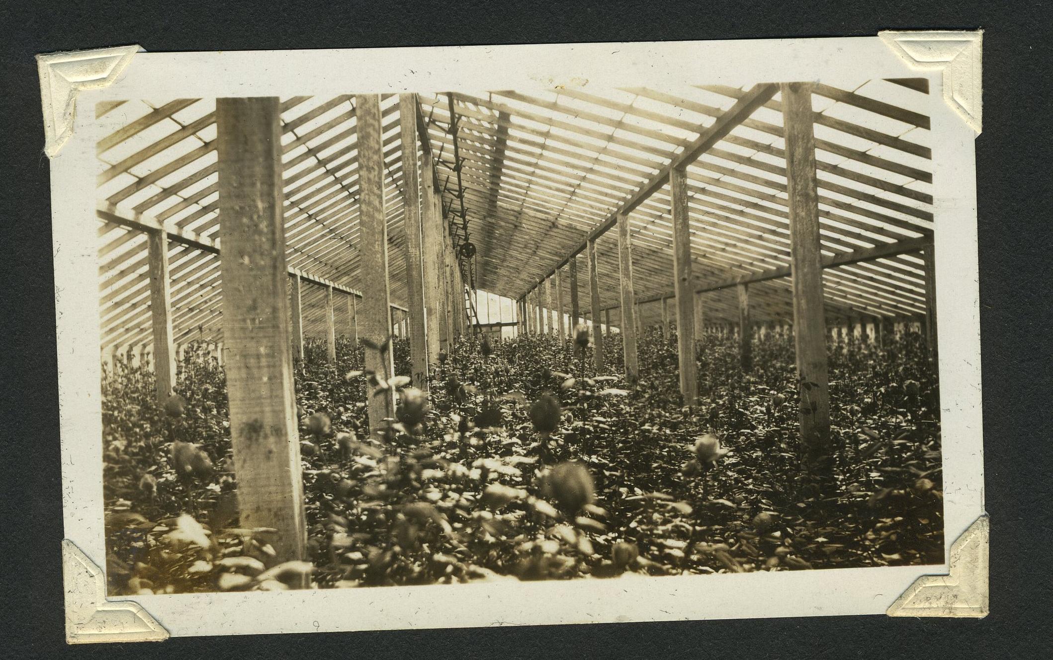 Inside Greenhouses 7.jpg