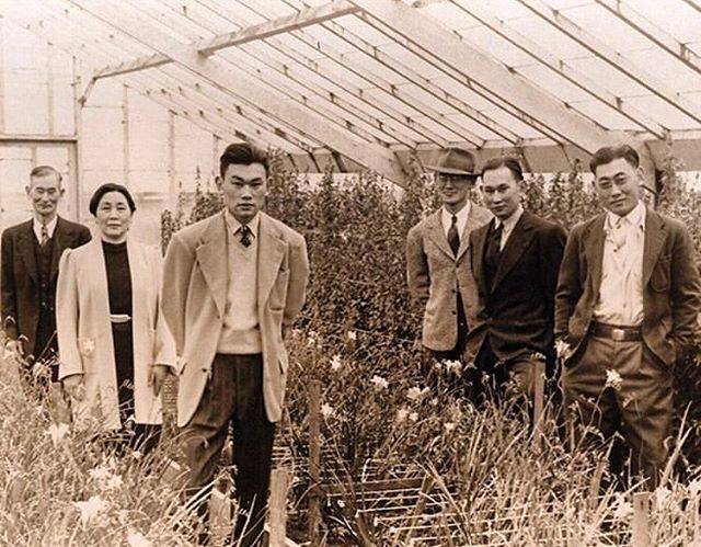 "The greenhouses here in SF were just a portion of Bay Area family run nurseries. Here's a beautiful shot of Oakland's Korematsu Family flower nursery from 1939, via @eastbay_yesterday who says: Today is officially Fred Korematsu Day in honor of his brave resistance against the mass incarceration of Japanese-Americans during WWII. Tune into KPFA radio 94.1 FM today to hear my interviews with Fred's lawyer Dale Minami and Laura Atkins, the co-author of ""Fred Korematsu Speaks Up."" @heydaybooks [photo: Korematsu Institute]"