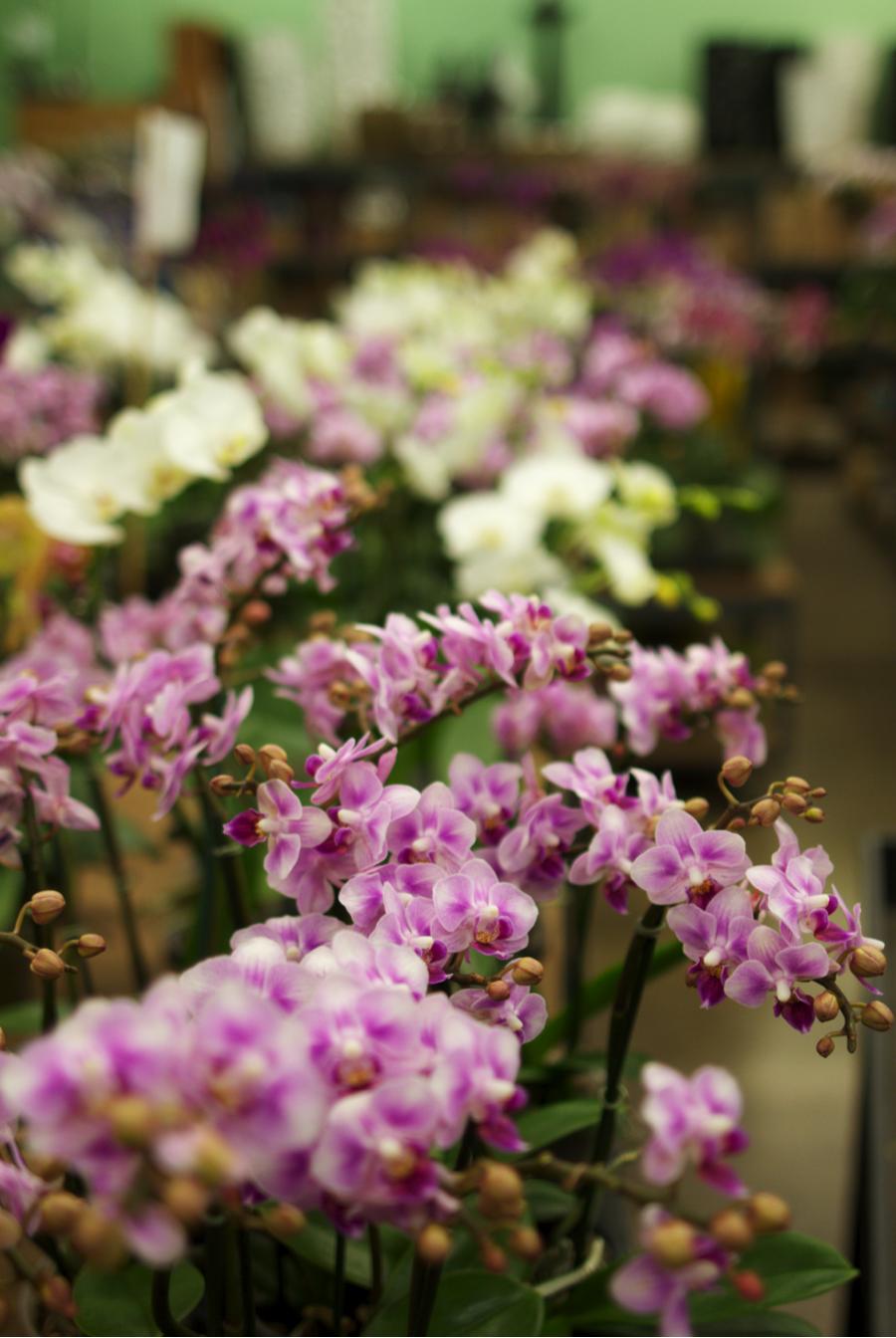 _03_BBG the Orchid Man - The Orchid Man  - Bangkok Botanical Garden_04.png