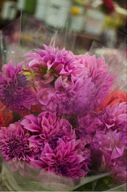 _43_Yamaoka+Flowers_03.png